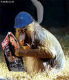 Leone_a_21_anni_mentre_cerca_di_leggere