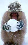 Leone_sulla_neve